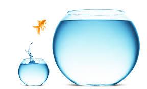 fish risk